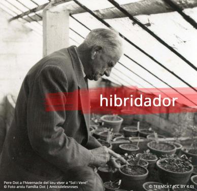 hibridador